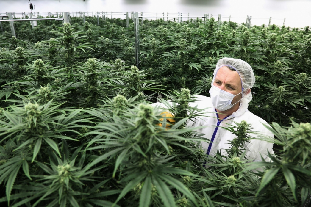 Будет ли легализована марихуана в казахстане как марихуана действует на печень